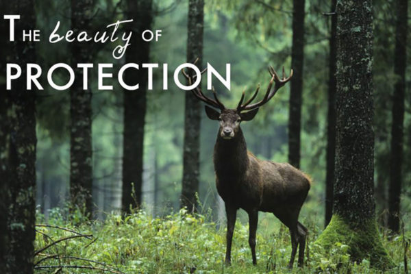 The Beauty of Protection